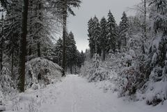 Diese Woche im Wald