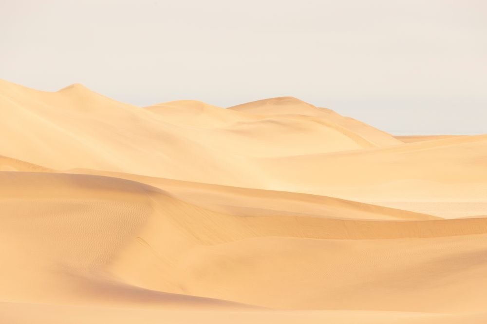 Diese Wüste lebt