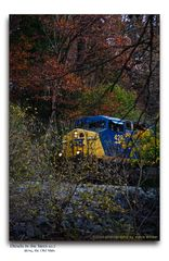 Diesels in the Trees - No. 2 (Best viewed F11)