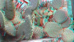 Diesen Kaktus fand ich in einem kleinen....