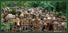 diesen Pilzgarten