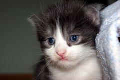 dieser Blick .-)