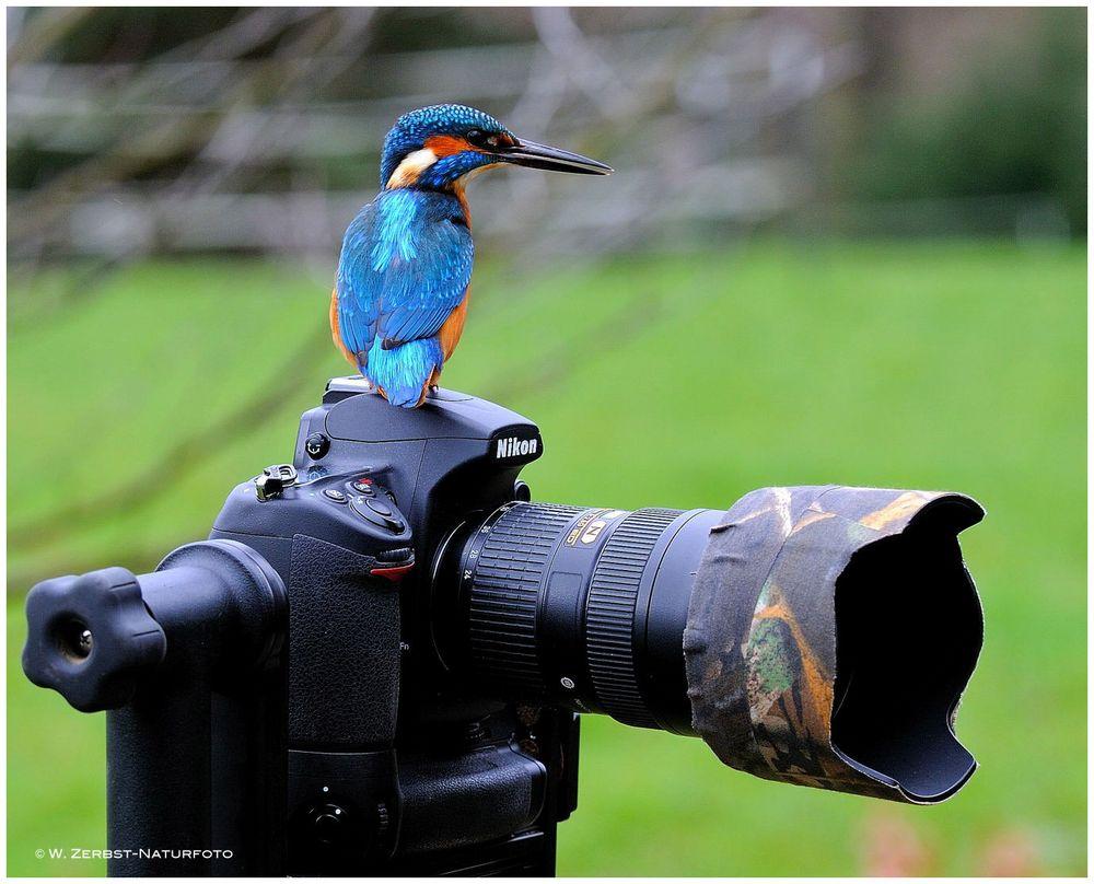 ---Dieser Eisvogel soll auf mein Equipment aufpassen !!!!! -----
