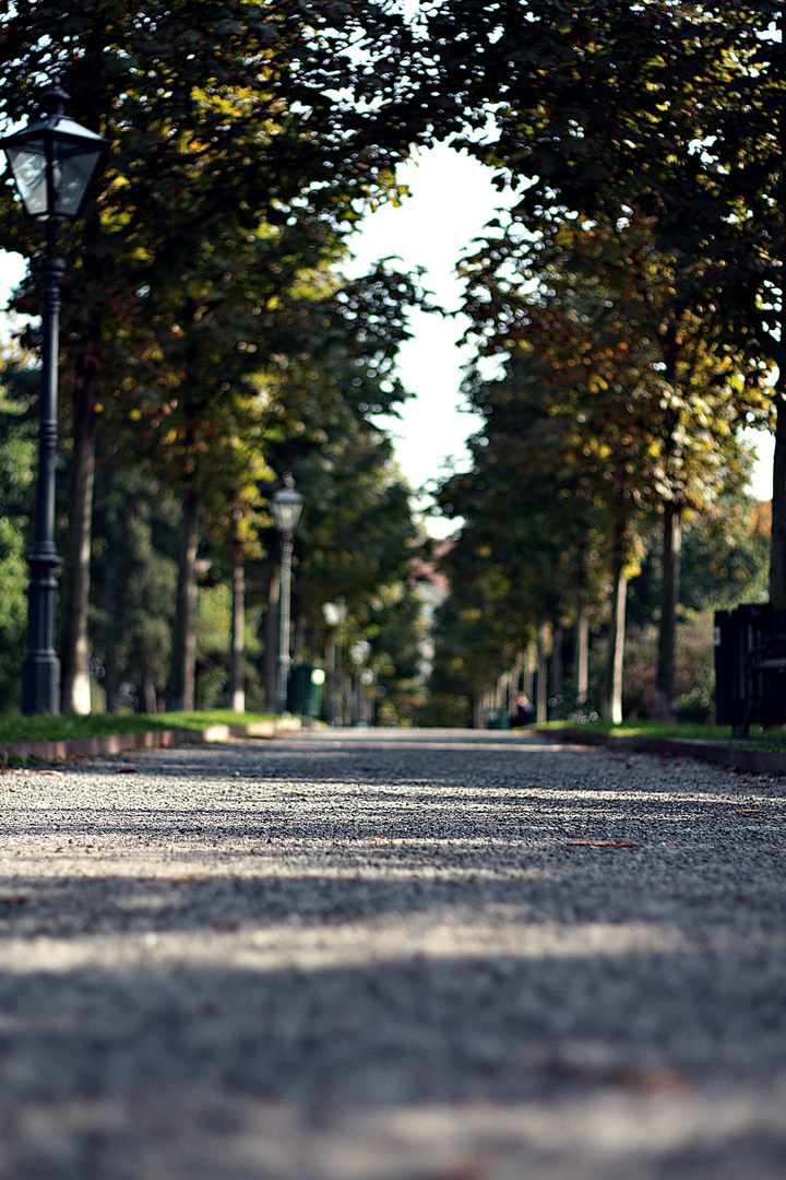 Dieser Weg 2 ...