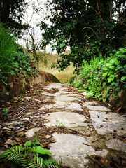 """""""Dieser Weg..."""""""