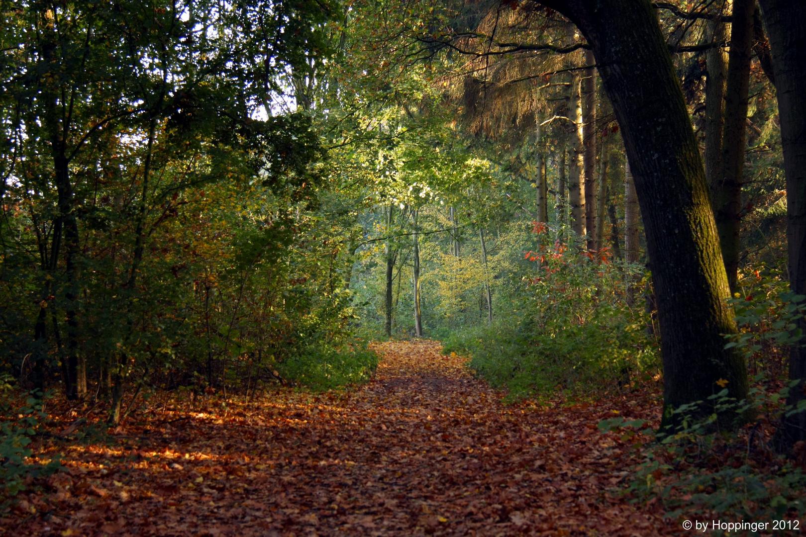 Dieser Weg wird ein Laubiger sein,....