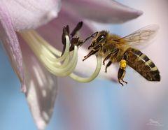 Dieses Bienchen...