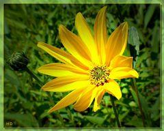 Dieses leuchtende gelb......