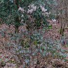 Dieses Waldmotiv im Januar.