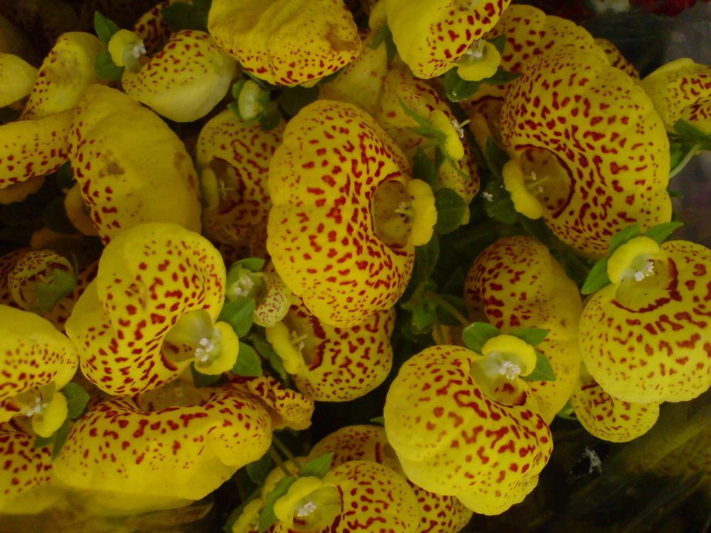 Different yellow flowers (Flor amarela diferente)