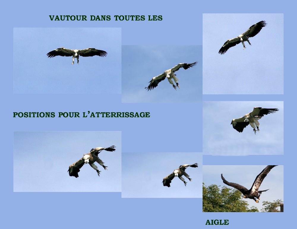 différentes phases de l'atterrissage (vautour)