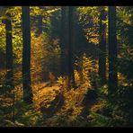 Diffuses Herbst-Licht  im dunklen Sollingwald... (Foto-Tapete)