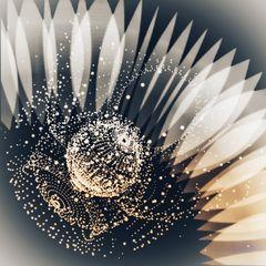 Digitale art of flower