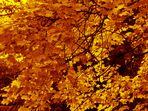 Digitaler Herbst