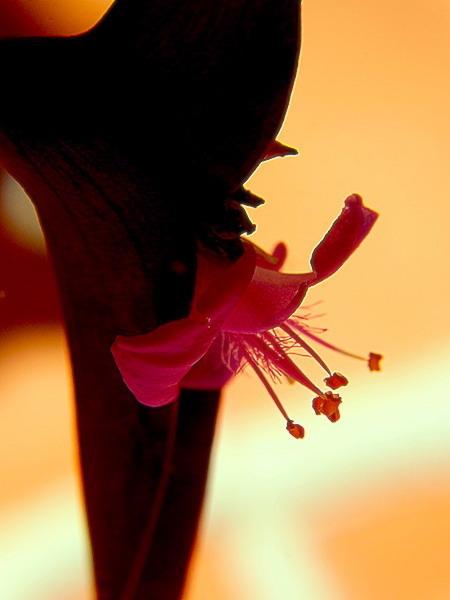 Dime que las Flores ajadas, también perduran.
