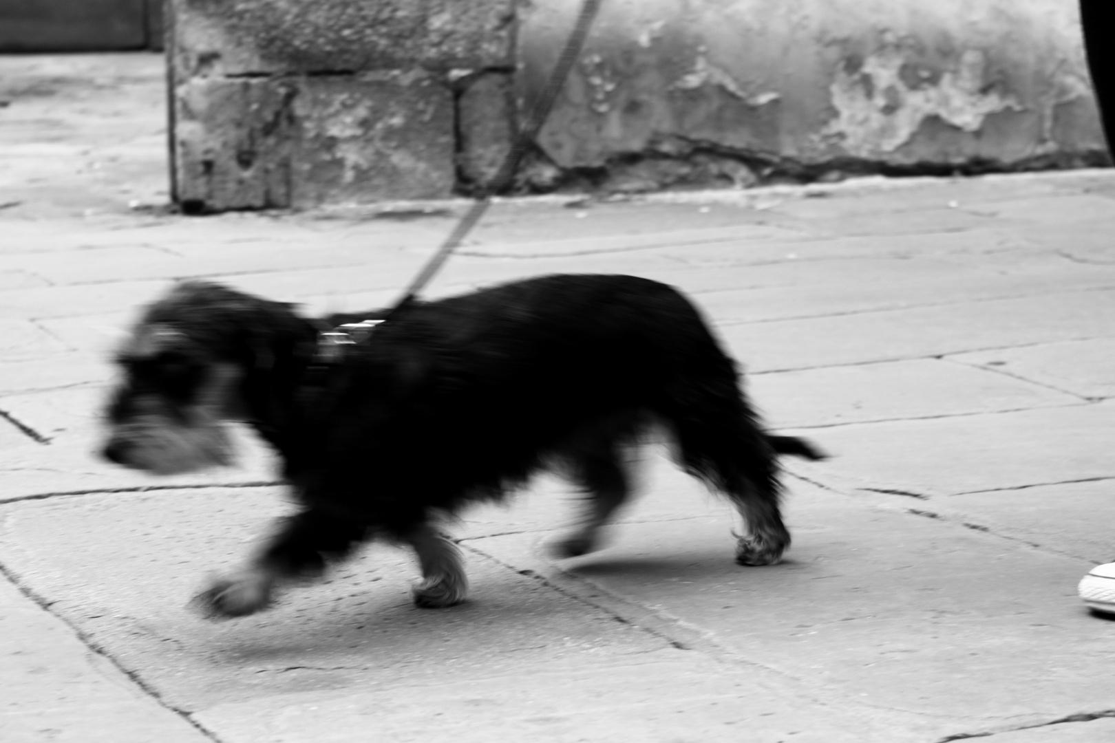 Dinamismo di un cane al guinzaglio giacomo balla - Colorazione immagine di un cane ...