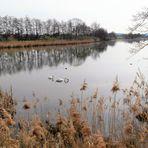 Dinkelsbühl : Schwäne und Enten auf dem  Walkweiher