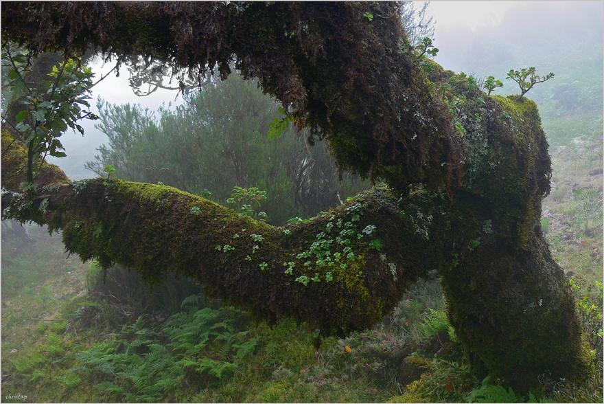 Dino-Baum ...
