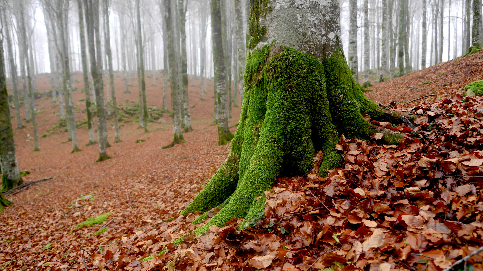 DISCOVER THE FOREST-6-WITH LUMIX GX7-CANSIGLIO/VENETO-ITALIA