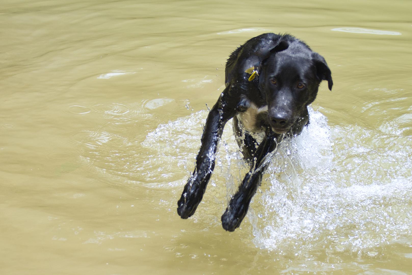 Disfrutant de l'aigua