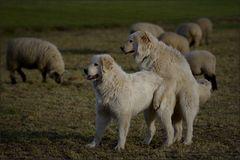 Diskrete Schafe ...