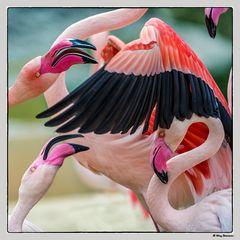 """Diskussion bei den Flamingos..."""