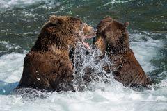 Diskussionen unter Bären