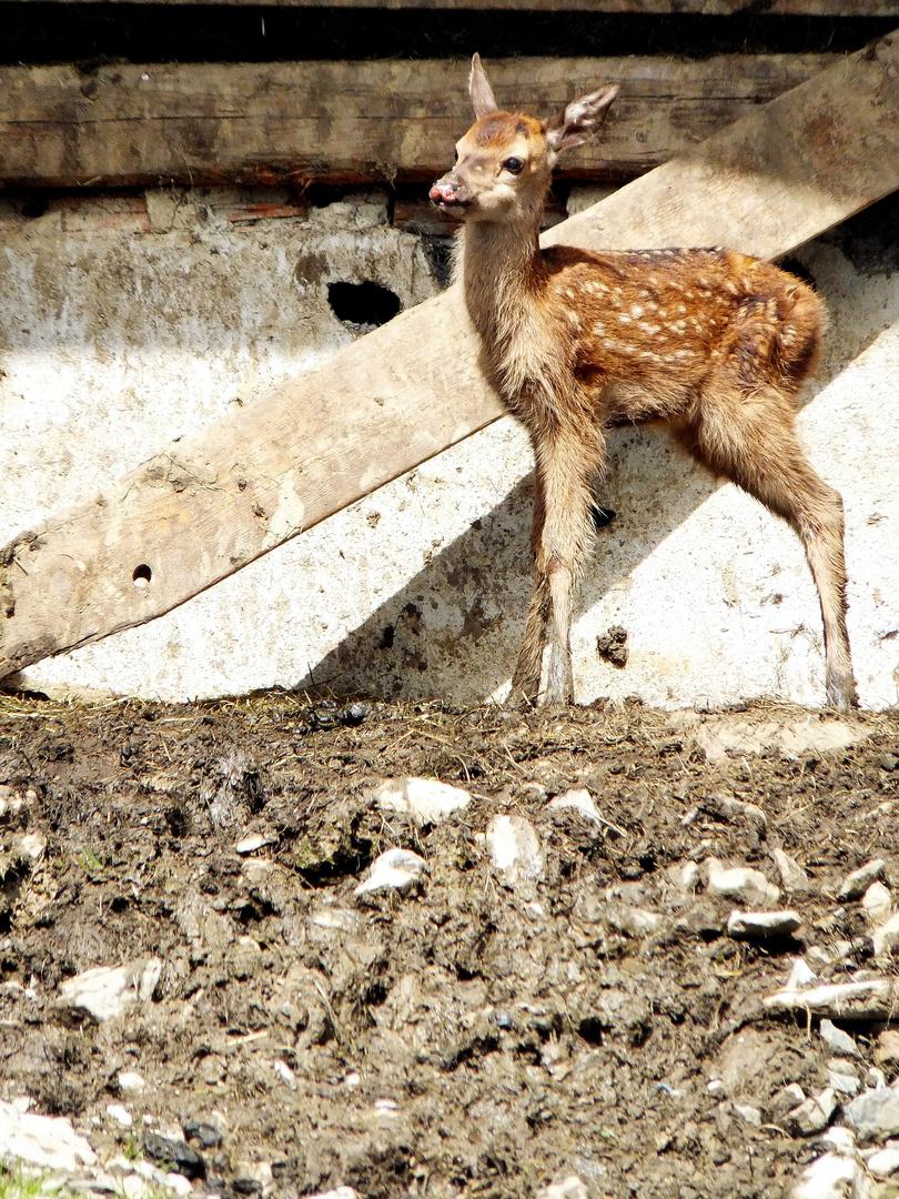 Disney hat angerufen, sie wollen ihr Bambi zurück