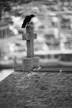 Disse il corvo: mai più