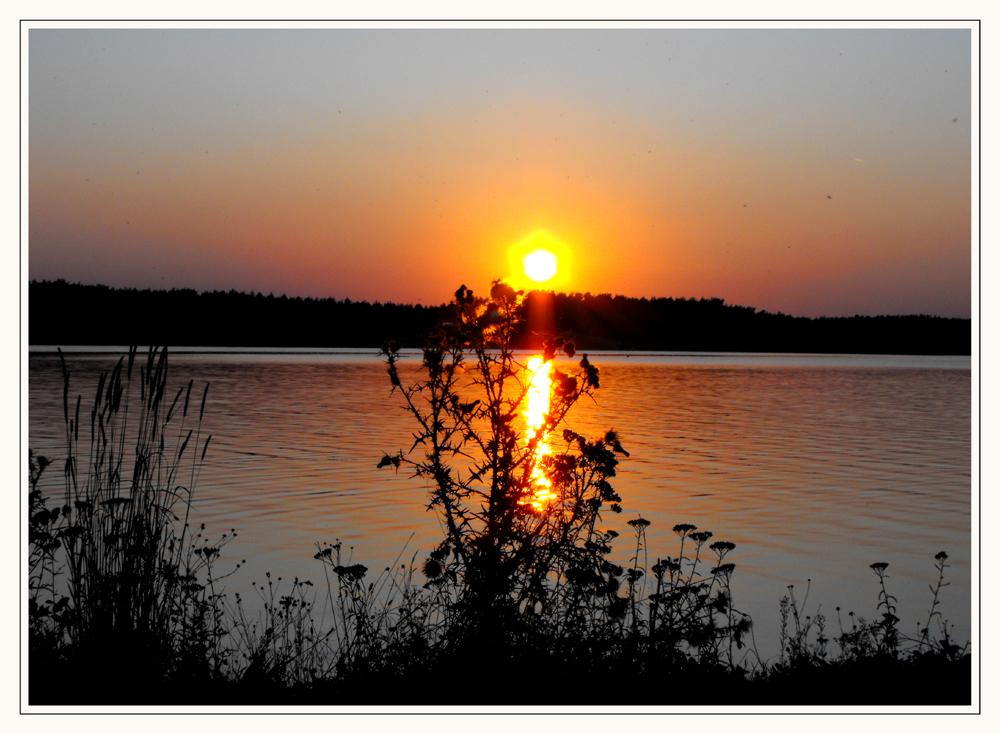 Distel im Licht des Sonnenuntergangs