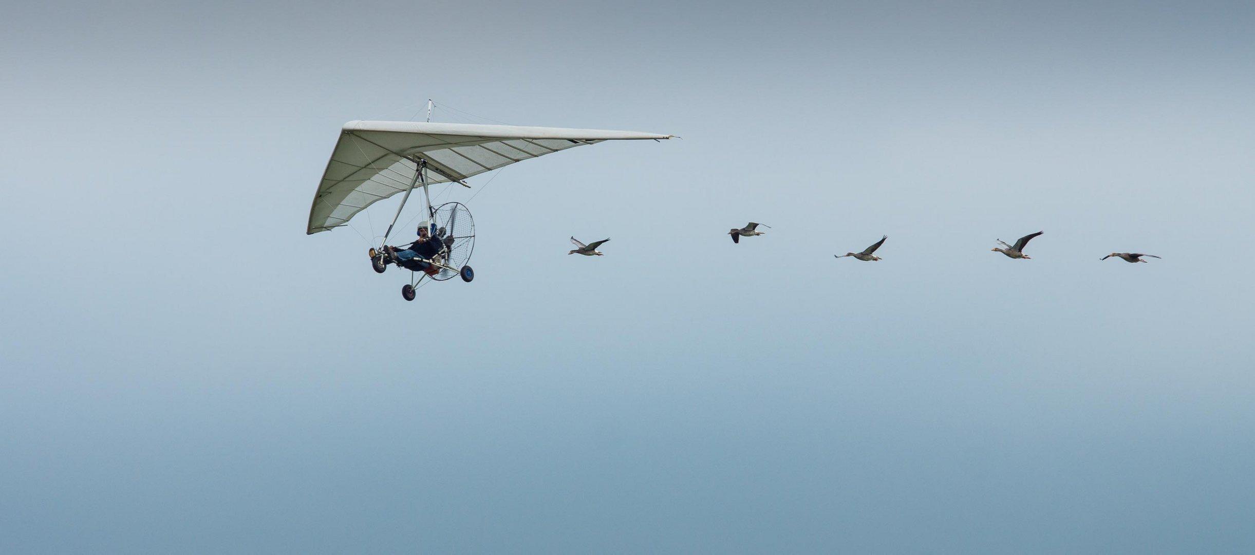 Dittinger Flugtage 2013 / 5