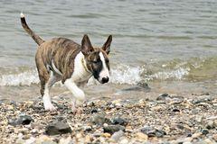 Diva on the beach