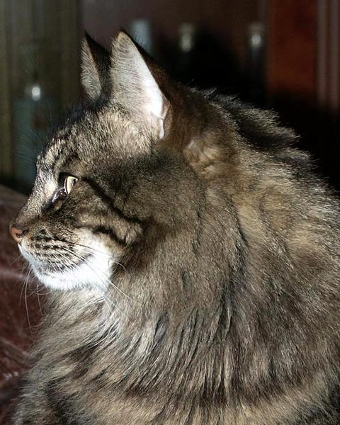 DJ-das Portrait einer Katze