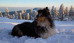 Django beim Wintersport
