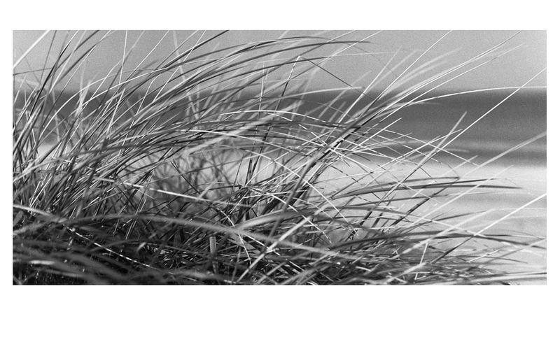 dk-gräser-06
