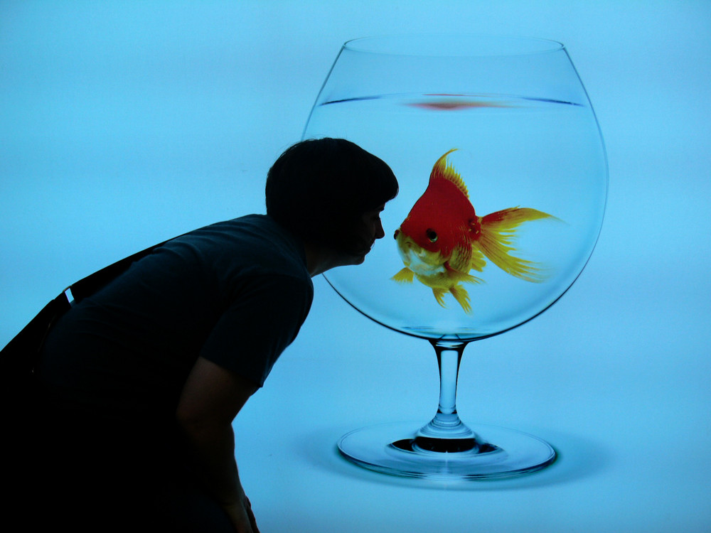 Do I get a King if I Kiss a Fish?