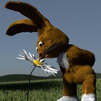 Doc Rabbit