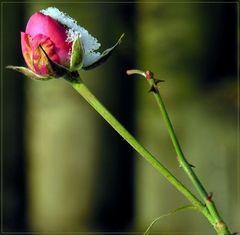 Doch Blumen, deren Saft uns blieb,...