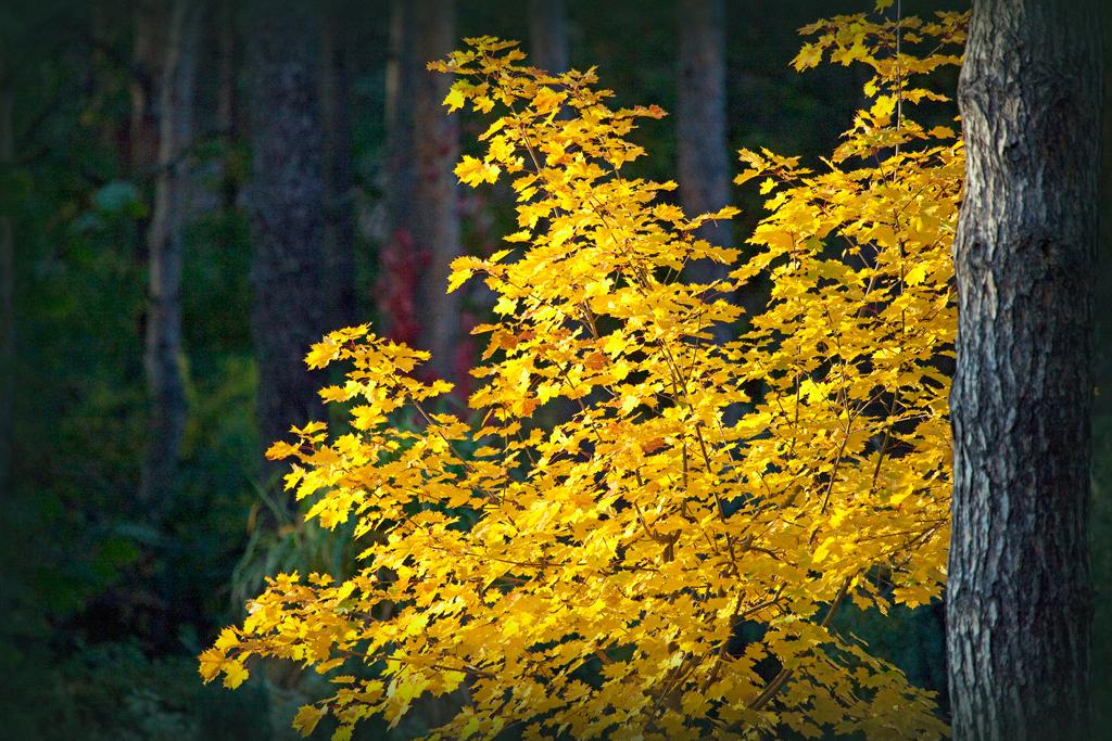 Doch noch ein goldener Herbsttag in Brandenburg