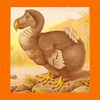 Dodo Amaranto