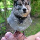 Dog Birdy