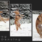 Dog - Dancing