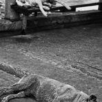 Dog Days Bangkok