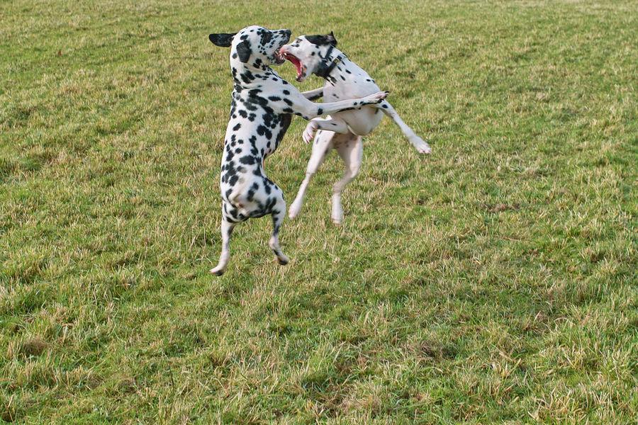 Dog Fight Part.2