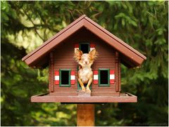 dog in a bird house