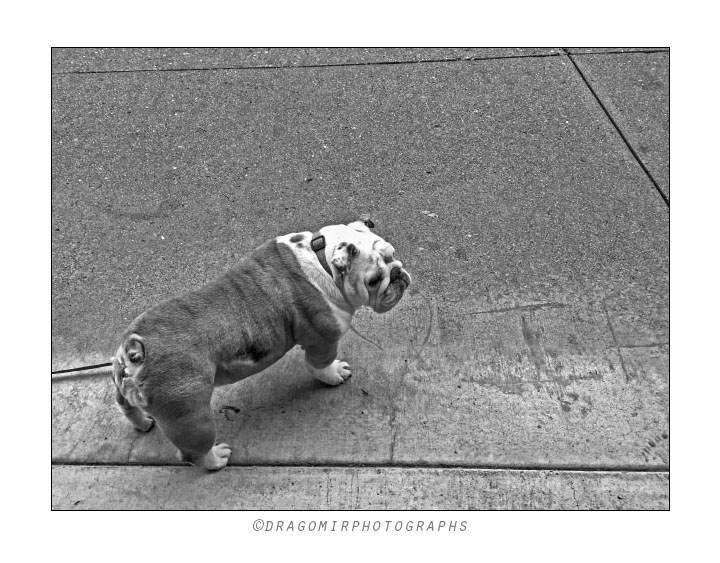 Dog In Lines 2