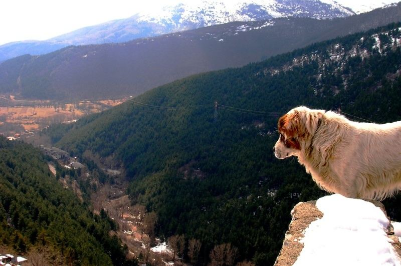 Dog looking panoramic view, Abruzzo (Italy)