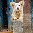Dog on A Wall