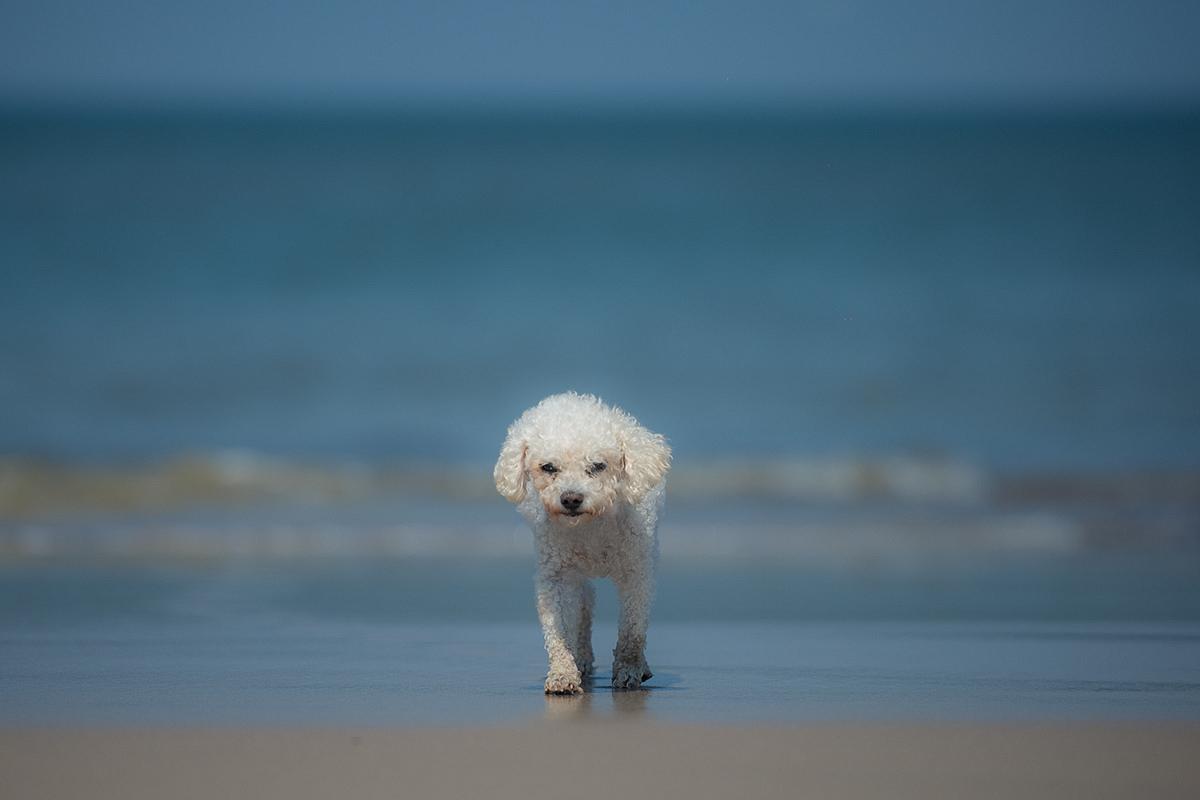 dog on catwalk, traditionelles Mittwochmittig :-))