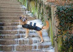 Dog on Ice...